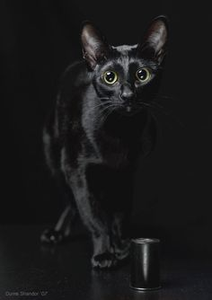 """if A Black Cat Crosses Your Path, It Means The Animal Is Going Somewhere."" --groucho Marx"