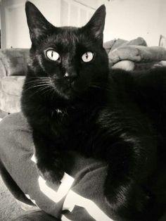 Beautiful black cat. Neonwoman