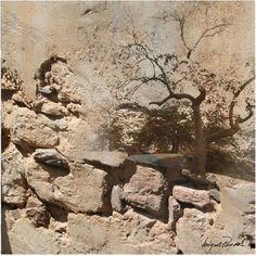 Trademark Fine Art Rock & Tree Canvas Art by Miguel Paredes, Size: 24 x 24, Beige