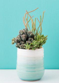 20 Weird House Plants You Didn