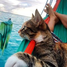 """She has adapted to living surrounded by water,"" Clark said of her cat companion. ""She's learned to trust that she will be safe with me."" 