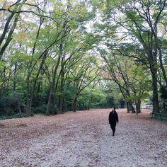 下鴨神社の紅葉は京都で一番遅いのでまだ青い葉が多いのですが森の落ち葉が参道に集まっていました Shimogamo will autumn leaves soon. by atelier_el