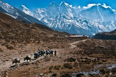 The main attractions in Nepal are not only eight thousand peaks of the Himalayas, but also hundreds of temples scattered throughout the coun...