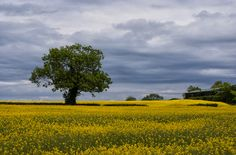 #countydown #tree #countryside #northernireland #geoffmcgrath #fineart