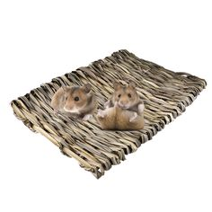 Grass hamster Nest Mat for small Pet hamster squirrel Guinea pig Chinchilla ferret rabbit grass mat small pets house accessories Buy Pets, Animal Jewelry, Totoro, Cat Toys, Guinea Pigs, Squirrel, Pet Supplies, Cat Lovers, Kittens