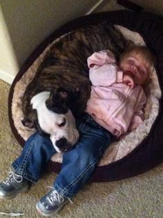 Naptime. The love between a dog and it's human baby