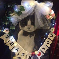 いいね!15件、コメント1件 ― 渡邉洸子さん(@mitsuko_watanabe)のInstagramアカウント: 「2/22 昨日は猫の日ー❤ ということで、披露宴でのつみれwelcome boardです❤❤ フォトプロップスもつみれの写真を切り抜いて作りましたー…」