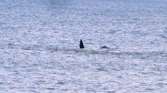 Y de pronto  las ballenas salieron a tomar aire - Playa Unión Rawson Chubut Argentina.-
