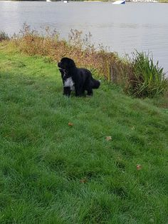 Qeeunslands Snoop dog