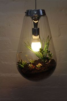 Never saw anything like this.  Very Clever - Hanging terrarium light.