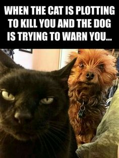 When the cat is plotting to kill you, and the dog is trying to warn you. . .