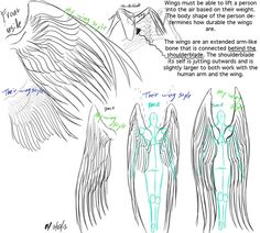 Wings anatomy and reference by G8ORSRULE.deviantart.com on @deviantART