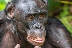 New regulation stops chimpanzees from being subjected to experiments in U.S. laboratories.