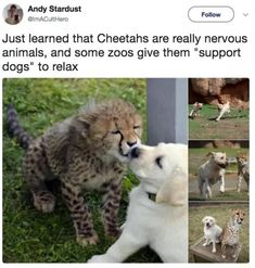 Things that make you go AWW! Like puppies, bunnies, babies, and so on. A place for really cute pictures and videos! Funny Animal Memes, Cute Funny Animals, Cute Baby Animals, Animals And Pets, Cute Cats, Funny Memes, Funny Humour, Funny Pics, Animal Pictures