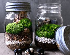 Glass Moon Bowl Terrarium with Live Woodland Plants Desktop