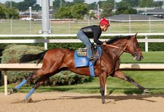 Great picture from @ChurchillDowns /Reed Palmer Photography of #AmericanPharaoh's pre-@BelmontStakes workout this AM!