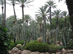 Huerto del Cura orchard, with nearly 500 palm trees. Elche, Spain