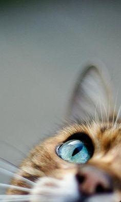 """Pet PhotographyBellos ojos, mas bellos si ven bien. Controlate cada año. Le en nuestro blogspot """"DEscansar frente a la PC""""-----"""