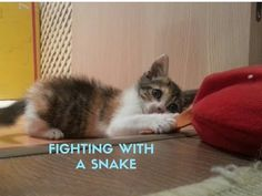 Cats Vlog 14 - I'm fighting with a snake ! - YouTube