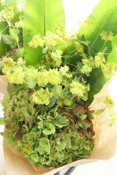 Herbs, Flowers, Herb, Royal Icing Flowers, Flower, Florals, Floral, Medicinal Plants, Blossoms