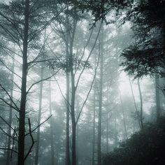 kirishigure:  終日雨でした。 #forest #rain #japan (Instagramで撮影)