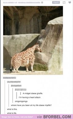 LOL An obese midget giraffe! Funny world. Funny Cute, The Funny, Hilarious, Baby Animals, Funny Animals, Cute Animals, Funny Tumblr Posts, My Tumblr, Jhon Green