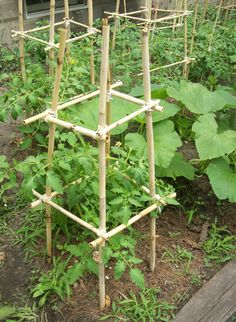 "If you have access to free bamboo, make these simple bamboo tomato cages for just the cost of the twine or wire that holds them together.  Need 4 ""legs"" that are pushed 8"" deep to support weight and 8-12 side pieces wired to support legs."