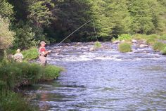 Photo courtesy of Shasta Trout Pit River fly fishing guides.  http://www.shastatrout.com/