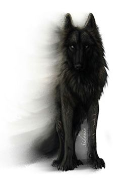 This is the bloodThirst Pack Leader. Scar, he's the most dangerous wolf ever. mess with him say good bye to your little wolf life ): He attacked my sister one day. never going to forget that ; Wolf Tattoos, Anime Wolf, Wolf Spirit, Spirit Animal, Fantasy Wolf, Fantasy Art, Fenrir Tattoo, Wolf Artwork, Wolf Wallpaper
