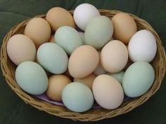 Many times people confuse Easter Eggers with Ameraucanas and Ameraucanas with Aracaunas. It's not...