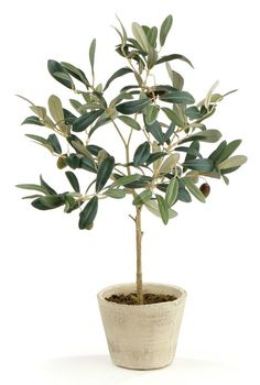 Potted Olive Tree // Plants and Flowers Potted Olive Tree, Faux Olive Tree, Potted Trees, Fake Trees, Bonsai Trees, Ficus Elastica, Artificial Boxwood, Artificial Plants, Fiddle Leaf Fig Tree