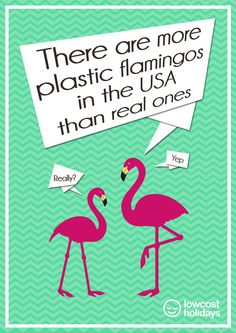 There are more plastic #flamingos in the #USA than real ones!   Fun Facts   lowcostholidays.com