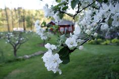 Rakas vanha valkoinen taloni Plants, Plant, Planets