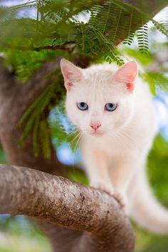 I love white cats ♡