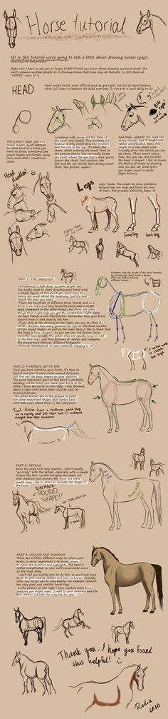 Horse tutorial by Chidoria.deviantart.com on @deviantART
