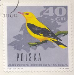 #birds  #collecting  #stamps  #desselberger  #michaluk