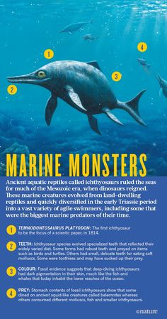 Ichthyosaurs were some of the largest and most mysterious predators to ever prowl the oceans. Now they are giving up their secrets.