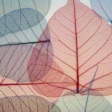Wall mural - Beautiful Leaves
