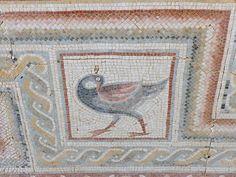 The Mosaics of Jordan: A photo gallery::Helen Miles Mosaics Jerash, Rare Orchids, Ancient Ruins, Mosaic Art, Camel, Jordans, Photo Galleries, Museum, Byzantine Mosaics