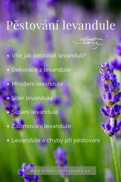 Lavender, Herbs, Gardening, Herb, Lawn And Garden, Spice, Yard Landscaping, Lavandula Angustifolia, Horticulture