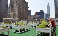 6 Pioneering Rooftop Gardens in NYC — and Where to Eat Their Produce