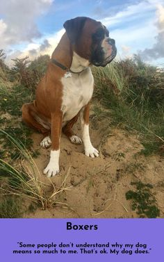 All About The Boxer Dog Personality Boxer Puppies For Sale, Boxer Dog Puppy, Dogs And Puppies, Doggies, Funny Dogs, Cute Dogs, Awesome Dogs, Forever Puppy, Boxer Dogs Facts