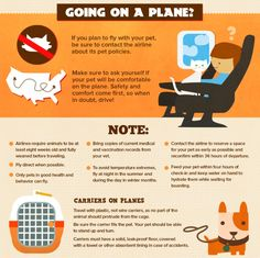 If you're flying with a pet, follow this checklist: