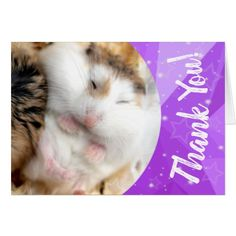 Shop Hammyville - Cute Hamster Thank You created by HammyVille. Personalize it with photos & text or purchase as is! Roborovski Hamster, Hamster Names, Cute Hamsters, Custom Greeting Cards, Birthdays, Prints, Animals, Products, Anniversaries
