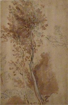 Study of trees by Federico Barocci (1535-1612), black chalk, brown wash, gouache heightenings, Fondation Custodia, Paris.