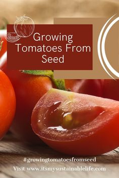 Growing tomatoes from seed may be the most popular skill any gardener, new or seasoned, wants to develop. Although learning how to grow tomatoes from seed is not difficult, there are a few considerations to be conscious of. | It's My Sustainable Life @itsmysustainablelife #growingtomatoesfromseed #growingtomatoesfromseedindoors #growingtomatoesfromseedtips #howtogrowtomatoesfromseed #startingtomatoesfromseed #growtomatoesfromseed #itsmysustainablelife