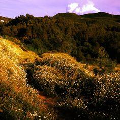 Primavera inacabable #Gelida #Penedes