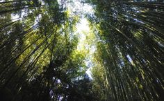 Bamboo forest Arashiyama boven. Japan, Kyoto- Travelhype