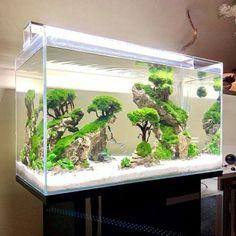 10 Tips on Designing a Freshwater Nature Aquarium Planted Aquarium, Aquarium Garden, Aquarium Landscape, Nano Aquarium, Nature Aquarium, Home Aquarium, Aquarium Design, Aquarium Fish Tank, Aquascaping