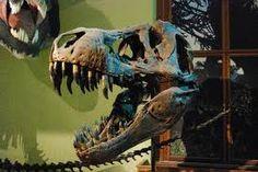 skull of dinasour 바카라 ▶▶COM889.COM◀◀ 바카라 바카라 바카라 바카라 바카라 바카라 바카라 바카라 바카라 바카라 바카라 바카라 바카라 바카라 바카라 바카라 바카라 바카라 바카라